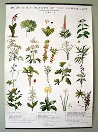 Flower Chart In English Flowers Chart With Names In English Flowers Chart With Names