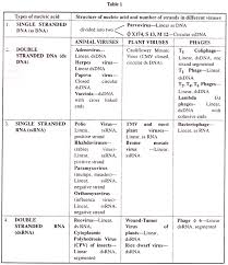 essay on viruses types of nucleic acid and nucleic acid number of strands