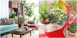 Decorating Small Living Room With Plants How To Decorate with Houseplants  Best Houseplant D on Wall