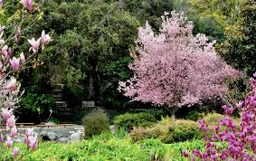 los angeles county arboretum and botanic garden is a classic in socal ecology