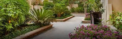 Designer Trees For Small Gardens Garden Designer Dubai Garden Design Company Dubai