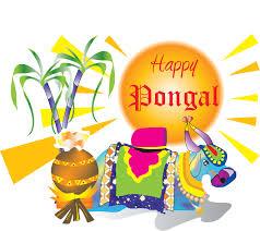new pongal festival hd pictures mattu pongal