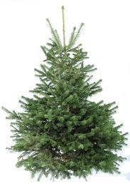 Christmas Tree Decorating Ideas Martha Stewart Glossary Imanada Cheap Real  Trees Moment Gres Remmy Xl8dl1td Studio Apartment Designs Interior