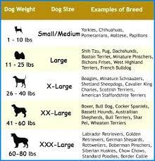 16 Proper Rottweiler Height Weight Chart