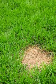 Brown Patch Disease How To Spot And Treat 5 Common Lawn Diseases Quicken Loans Blog