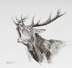 Renne Bellissime идеи для рисунков Nel 2019 Illustrazione