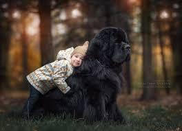 Kleiner hund hat angst vor großen hunden