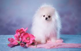 Wallpaper white, look, flowers, pose ...