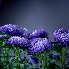the chrysanthemums summary and analysis the chrysanthemums by john steinbeck