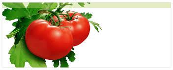 """Résultat de recherche d'images pour """"gifs tomates"""""""
