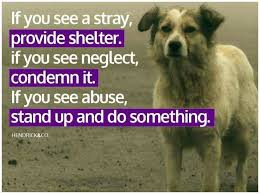 Rescue Dog Quotes Amazing Dog Adoption Quotes 48 Animal Rescue Quotes On Pinterest Animal