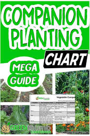 Vegetable Companion Planting Charts Companion Planting Chart Epic Guide To Interplanting