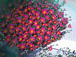 summer outdoors wallpaper. Flower Urn | Wallpaper, Summer, Outdoors, Nature Summer Outdoors Wallpaper