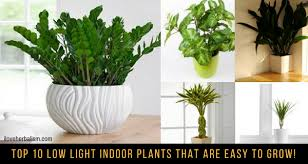 TOP 10 Low Light Indoor Plants That Are Easy To Grow! - I Love Herbalism