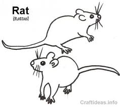 Small Picture Free Coloring Book Page of a Rat