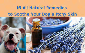 16 all-natural remedies to soothe your dog's itchy skin – The Dog Bakery