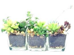 small office plant. Good Office Plants Plant Ideas Desk Best Small K