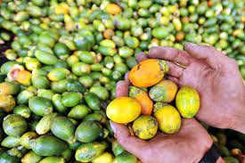 Tradisi Makan Sirih Pinang Papua, Benarkah Berpotensi Sebarkan Virus Corona?
