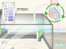 How To Test The Water In An Aquarium 13 Steps With Pictures