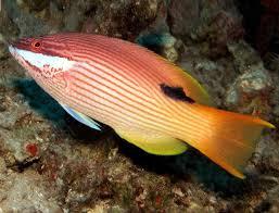 Hawaiian Reef Fish Species You Might Catch Off Maui Hawaii