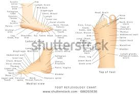 Reflexology Chart Reflex Zones Feet Side Stock Vector