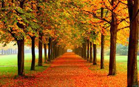 Autumn MacBook Wallpapers - Top Free ...