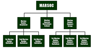 Usmc Chain Of Command Chart Marsoc Marine Special Operations