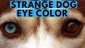what are the strangest dog eye colors