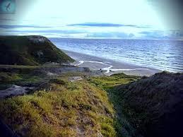 Карское море Описание водоема животный и растительный мир Акулы  Карское море