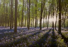graham brown home bluebell landscape canvas print find your local store stocking wall art on graham and brown wall art ireland with graham brown bluebell landscape canvas print wall art topline ie