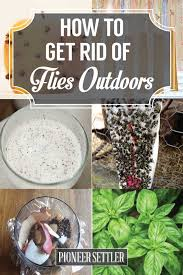 how to get rid of flies outdoors free and homesteads