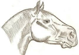 horse face drawing side. Simple Horse 900x632 Side View Detailed Horse Head By Wh Chicka 999 For Face Drawing GetDrawingscom