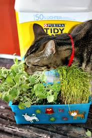 once your indoor cat garden is decorated set it somewhere your cats like to hang out and watch the fun our cats had a blast taking turns having their