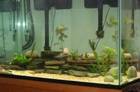 Image result for augmenting the size of your custom fish tank