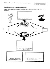 photosynthesis and respiration worksheet answers photosynthesis