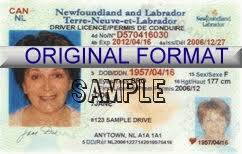 Card - Canadians Identification Nl New For Association Photo