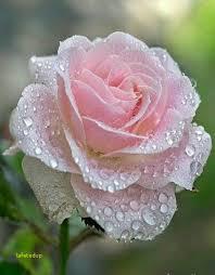 """Résultat de recherche d'images pour """"belle fleurs"""""""