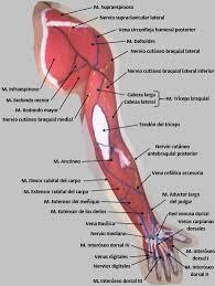 Anatomystic - Trabajo en Body Painting de Alfredo Cordovés ...