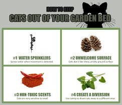 how to keep cats out of the garden. How To Keep Cats Out Of The Garden K