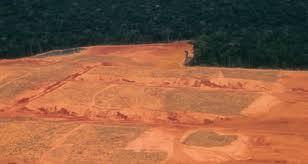 What Is Illegal Logging Illegal Logging Portal