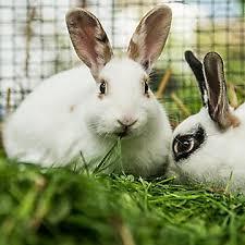 petsmart animals bunny. Fine Petsmart Set Up Your Rabbitu0027s Home On Petsmart Animals Bunny I
