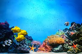 Fish Backgrounds Underwater With Fish Background Gallery Yopriceville