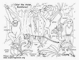 rainforest animals coloring pages printable new forest animals coloring pages forest animal coloring pages free of