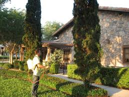olive garden lawn spray pest control chinch bugs ants