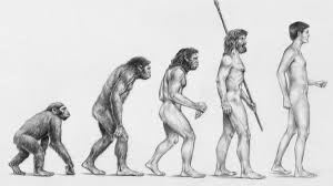 Image result for charles darwin theory of evolution