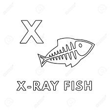 Popular halloween coloring pages , thanksgiving pages to color and fun christmas coloring pages too! Vector Cute Cartoon Animals Alphabet X Ray Fish Coloring Pages Royalty Free Cliparts Vectors And Stock Illustration Image 126016229