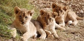 zoo.  Zoo To Zoo R