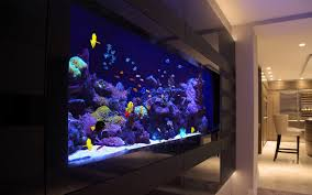 Cool Aquariums For Sale Aquarium Supplies Australia Buy Fish Tank Buy Marine Fish Online