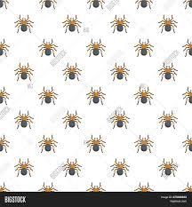 Tarantula Web Design Tarantula Pattern Image Photo Free Trial Bigstock