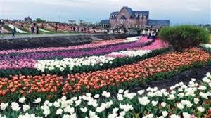 Добропарк біля Макарова: понад мільйон квітучих тюльпанів та сотні  відвідувачів | ФастівNews.City